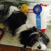 Keefer's first day doing AKC Agility and he is a winner!