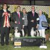 A breeders dream win!  Thank you Judge Sei-ichiro Ishimaru for this Breeders Showcase Grp 1 in Santa Barbara, CA 2016!!